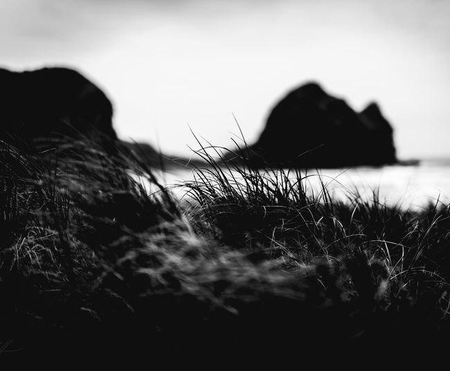 B L A c K Piha Beach Nature Outdoors No People Grass Sand Dune Sky Beach Sea Photooftheday EyeEm Gallery EyeEm Best Shots - Nature Travel Photography Field Landscape Landscape Photography Newzealand Seascape Checkthisout Power In Nature