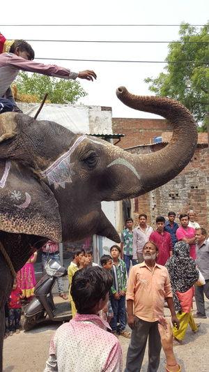 Elephant The Giant Friend