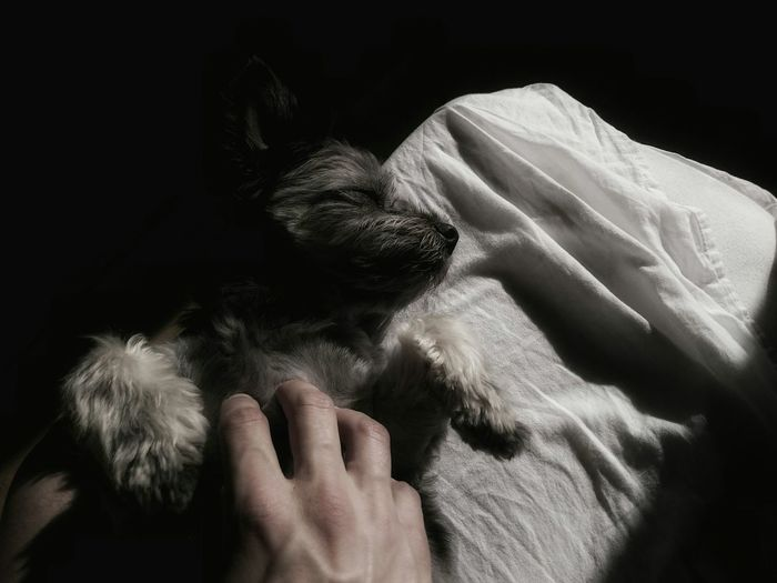 What My Hands Touch series ... dogsofeyeem Good Morning Cuddlebuddy Summer Dogs Waking Up Creative Light And Shadow Dogs The EyeEm Facebook Cover Challenge Faces Of Summer Beauty Redefined my dogs facial expression enjoying in the morning sun...