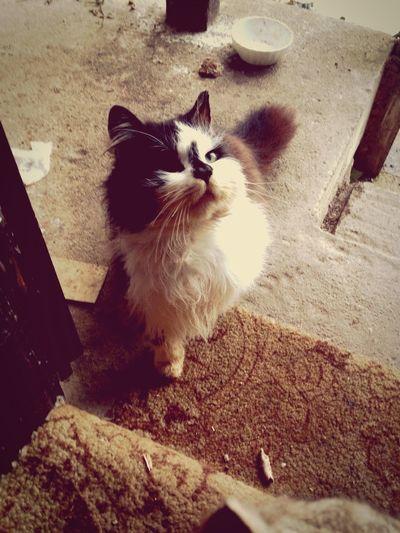 EyeEmNewHere Animal Themes Domestic Animals Pets Domestic Cat One Animal Mammal Feline Day Indoors  First Eyeem Photo