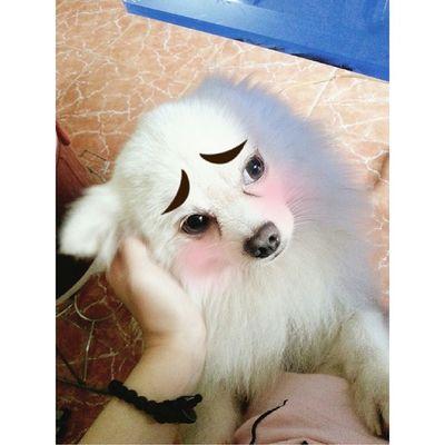 Awwwww Dogs Mypet Cute