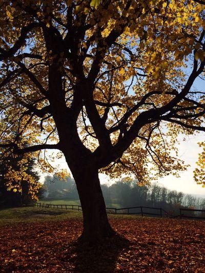 sous les branches d'un arbre Reportage 2015  PHpicture First Eyeem Photo