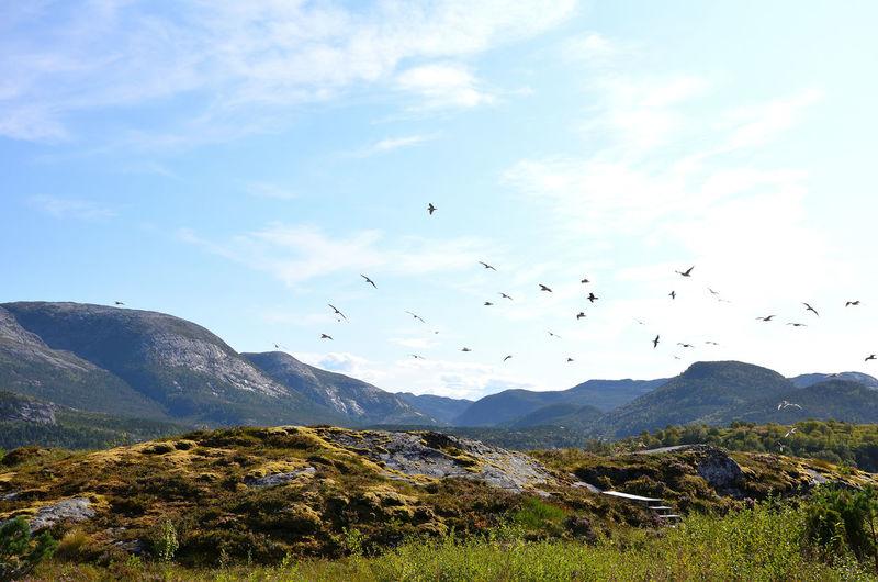 Trøndelag Sky
