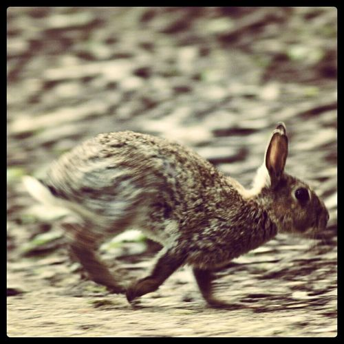 Run Rabbit, Run!! Motion Shot