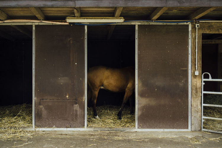Midsection Of Horse Standing In Stable