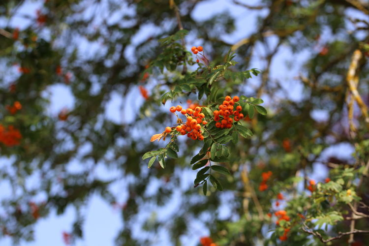 Low angle view of flowering plant against trees