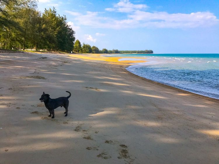 A black dog on tropical sandy beach in Thailand Dog Pets One Animal Domestic Animals Animal Themes Sky Cloud - Sky Nature Mammal Beach Outdoors Sea No People Sand Water Scenics Day Beauty In Nature Thai Thailand Shore