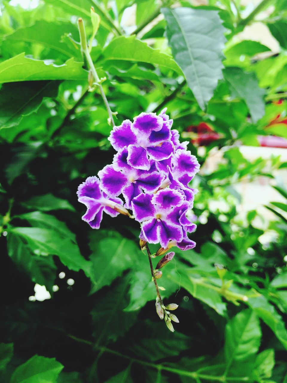 flower, growth, purple, beauty in nature, nature, plant, fragility, green color, day, outdoors, leaf, no people, freshness, blooming, close-up, flower head