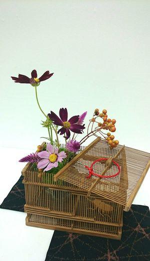 生け花 Flower ıkebana Flower Arrangement Japanese Culture コスモス