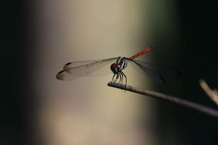 Dragonfly sit