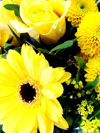 Weltfrauentag Flower Fragility Yellow Petal Freshness Beauty In Nature Flower Head