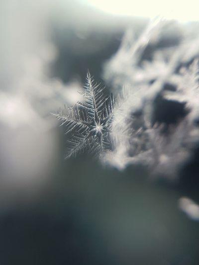 Close-up of dandelion on plant against sky
