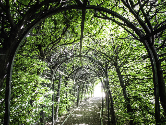 Acceleratore di particelle Altro, Oltre Arch Burst Carpinus Betulus Diminishing Perspective Empty Exit Eye4enchanting EyeEm Gallery EyeEm Masterclass Green Color Growth Lush Foliage Mllml Narrow No People Outdoors Pathway Playing With Thoughts The Way Forward Treelined Tunnel Vanishing Point Walkway Showcase June