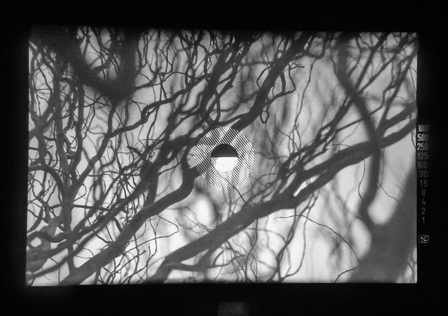 Minolta X700 Bare Tree No People Tree Day Outdoors Nature Analog Camera Viewfinder Viewfinderview Bw Blackandwhite Scale