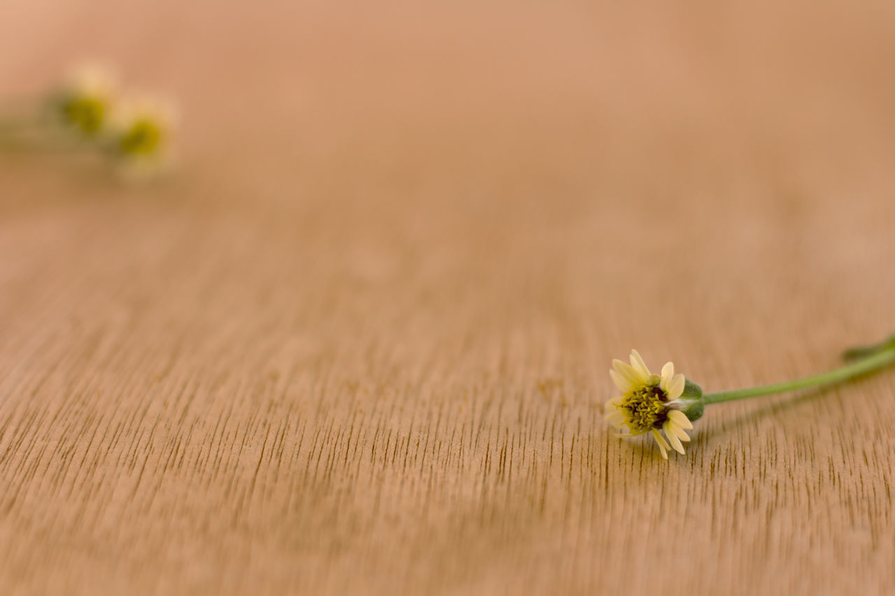 Close-Up Of Flower On Wood
