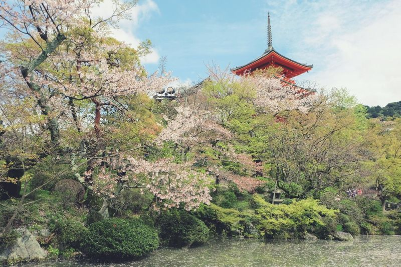 Sakura Sakura2015 Kiyomizu-dera Temple Kyoto Japan Buetiful KiyomizuTemple Kyotocamera Hello World