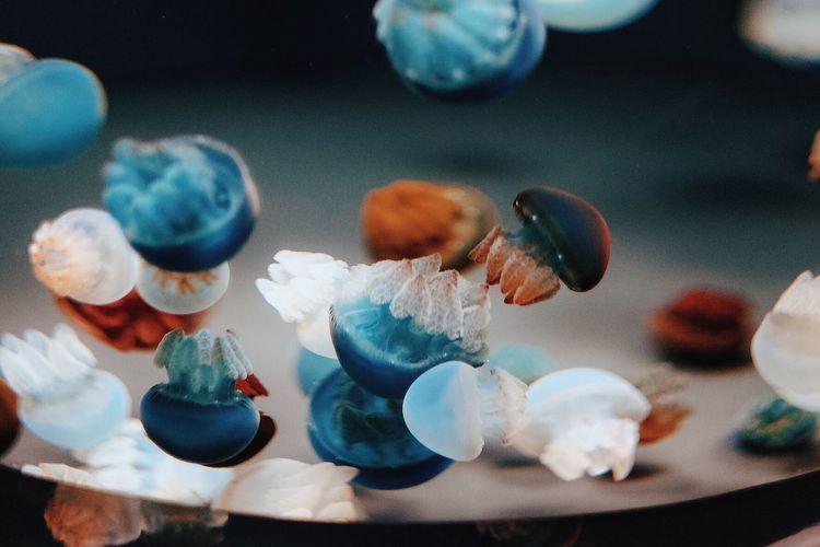 Animals Aquarium Blue Close-up Colorful Jellyfish Sealife Underwater