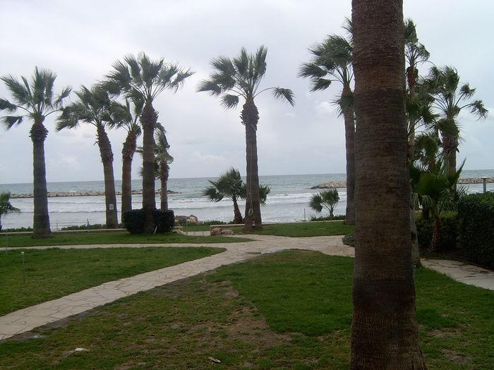Beach Beauty In Nature Grass Landscape Palm Tree Sea Tree Water