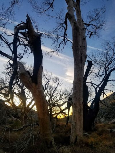 Burned Tree Sunset Tree Tree Trunk Sky Silhouette Nature Outdoors Branch Low Angle View Landscape Beauty In Nature No People Growth