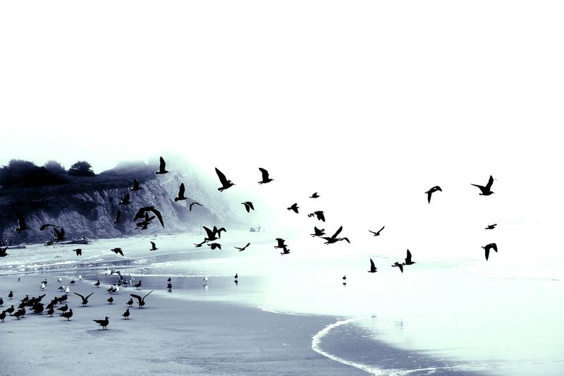 Beachphotography Afternoon Light Ocean Blackandwhitephotography Monochrome Birds Of EyeEm  Bird Flying Flock Of Birds Silhouette Sky Horizon Over Water Waterfront