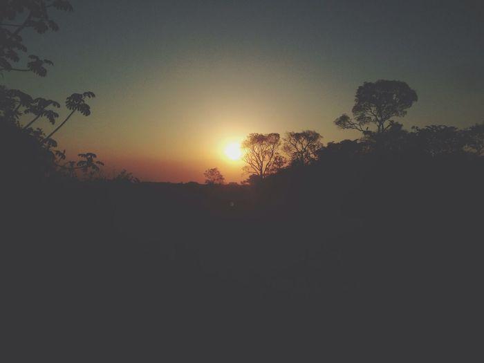 Sunset Djungle Sun