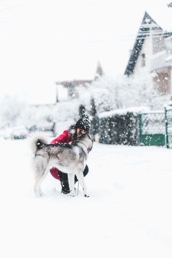 Husky Winter Snow Mammal Cold Temperature Domestic Animals Domestic Pets Animal Animal Themes One Animal Canine Dog Vertebrate Architecture Nature Built Structure Building Exterior Snowing White Color No People Outdoors Warm Clothing