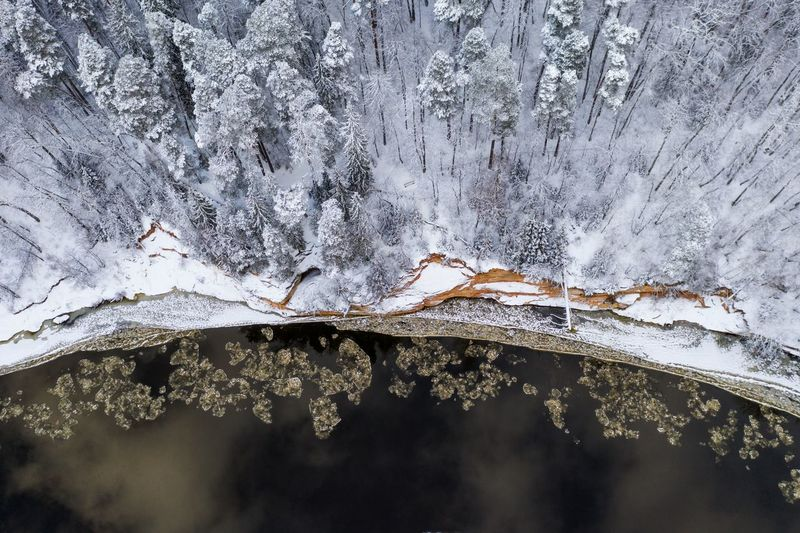 High angle view of snow covered trees by lake in forest