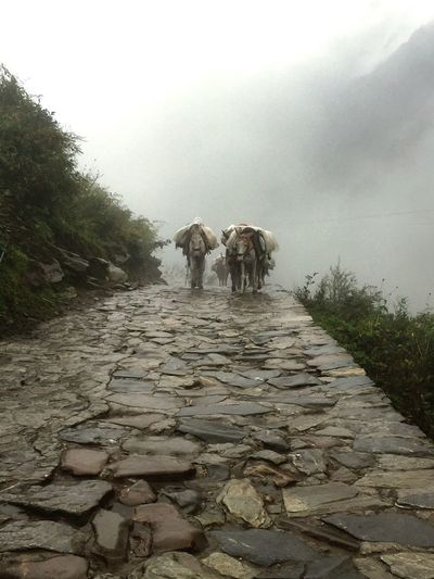 Nature Outdoors Animal Themes Domestic Animals Beauty In Nature Sky Horses Kedarnath Mountains India Sacred Places