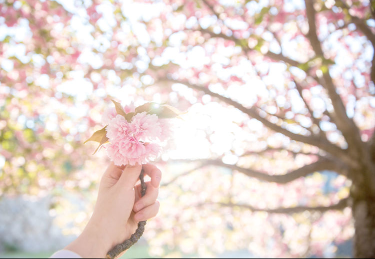 Close-Up Of Human Hand Holding Blossom Against Tree