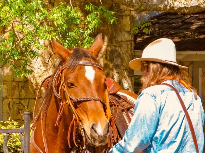 Texas Hill Country Cowboy & his Horse The History And Romance Of The American West Cowboy Mammal Animal Animal Themes Domestic Animals Animal Wildlife Domestic Livestock Horse Hat Tree Vertebrate One Animal Plant One Person Real People Day Sunlight Nature