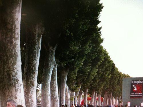 En fila india TreePorn EyeEm Nature Lover EyeEm Best Shots - Trees
