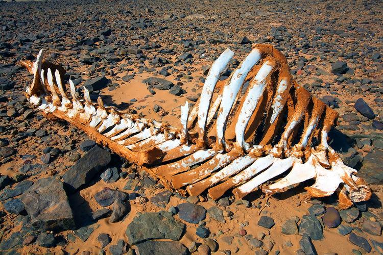 Animal skeleton on ground