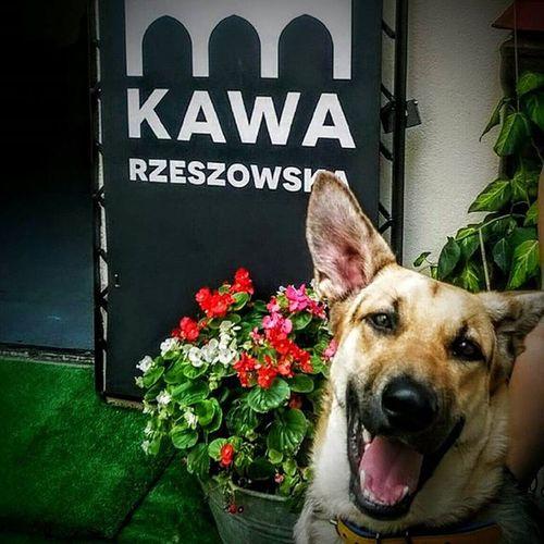 """Luna jest zdecydowanie zadowolona po wizycie w Kawie Rzeszowskiej, zresztą jej właściciele też ...tak wynika z wpisu na fb prawie owczarkowe love. Kawa Rzeszowska zaprasza na wyśmienitą kawę z pupilem. Kochamy zwierzęta i zawsze są mile widziane w lokalu na Kościuszki 3 w podwórzu gdzie czeka na nich miska z wodą.. """"Kawa Rzeszowska - lokal przyjazny zwierzętom"""" Rzeszów Rzeszów Coffee Coffeetime Barista Aeropres Mobilnakawiarnia Kawa Instamood Instagood Instalove Instacoffee Igersrzeszow Kawarzeszowska Coffebreak Coffeetogo Coffeelove Love Photooftheday Happy Bestoftheday Instamood Herbata Kawasamasięniezrobi Kawarzeszowska kawiarnia"""