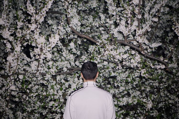Rear view of man standing by cherry blossom tree