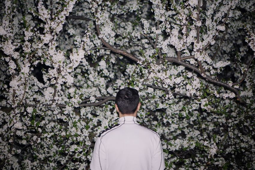 White Flash Blooming Blossom Spring One Person One Man Only Tree Branch Men Rear View Plant Lush - Description Lush Foliage In Bloom Plant Life