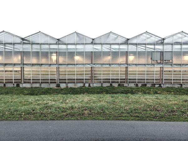 glasshouses 02 Agriculture Nature Architecture Outdoors Taking Photos Minimalism EyeEm Best Shots Eye4photography  Glasshouse