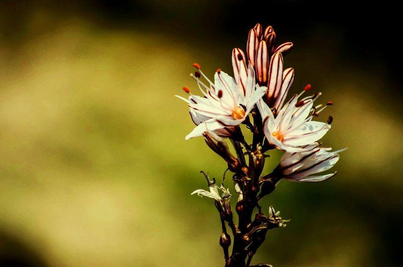 Flower Flowering Plant Flower Plant Beauty In Nature Freshness Fragility Vulnerability  Nature Day Petal