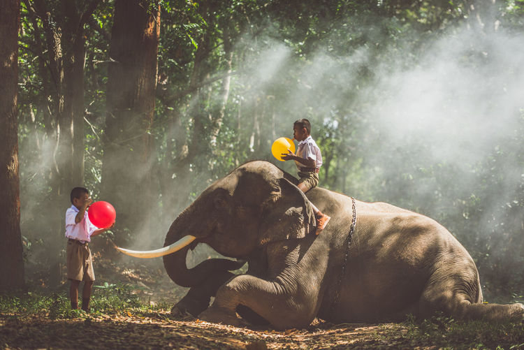 Schoolboys blowing balloons with elephant in forest
