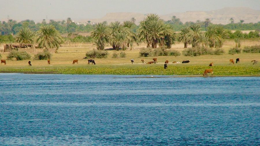 No People River River View Animals Cows Africa African Beauty Nile River NileRiver Nile_view Nile Palm Trees Grass Waterscape Water And Landscape Betterlandscapes The Great Outdoors - 2017 EyeEm Awards