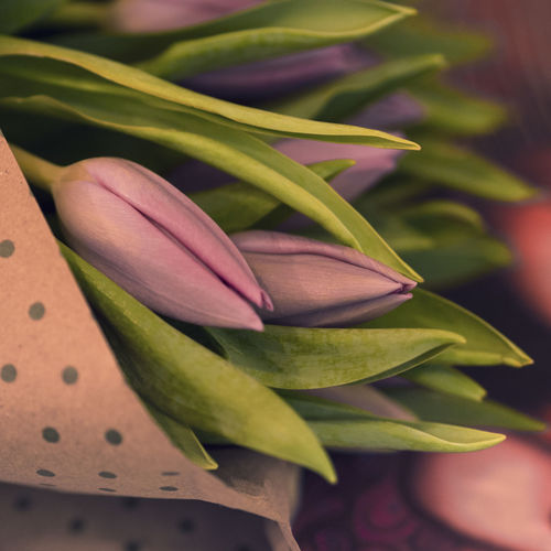 Plant Freshness Flower Flowering Plant Beauty In Nature Growth Close-up Fragility Petal Flower Head Plant Part Green Color Leaf Purple Tulips Springtime Spring Flowers Boquet Indoors  EyeEm Nature Lover Gift Eyeem Gallary