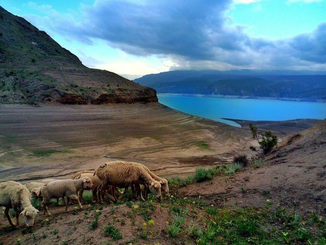 Sea Landscape Beach Outdoors Animals Mountain Nature Beauty In Nature No People Travel Destinations Dagestan Lake Nature Sheep Sheep🐑 LeTv X600 LeEco