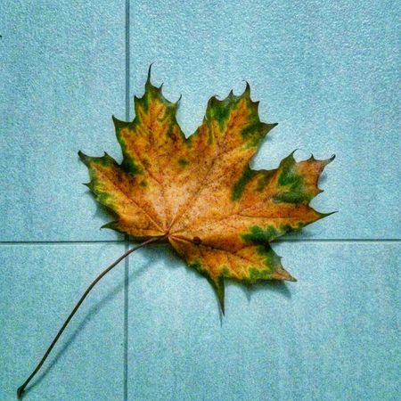 Leaf 🍂 Leafporn Nature Nature_collection EyeEm Nature Lover Gress Grounded