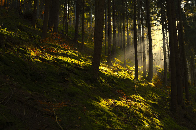 The thuringian forest Beauty In Nature Day Environment Fog Forest Germany Green Color Growth Landscape Morning Nature No People Outdoors Scenics Sunbeam Sunset Thuringia Thüringer Wald Tree Tree Trunk WoodLand Yellow The Great Outdoors - 2017 EyeEm Awards
