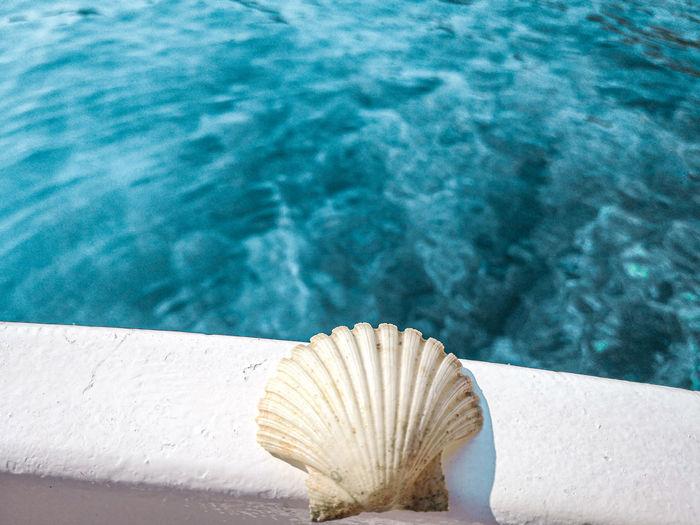 Blue sea shell