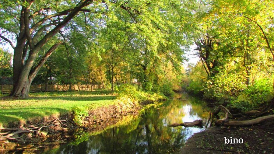 Walking Around My Neighborhood Clam River Boardwalk Stillness In Time Still Green Beautiful Nature Cadillac Michigan