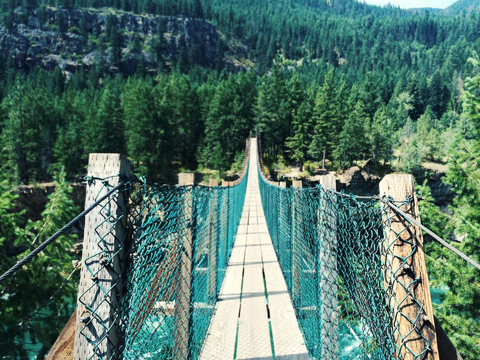 Foot bridge in evergreen forest in summer. Global Warming Hiking Montréal Pacific Northwest  Pristine Washington Wilderness Area Adventure Beauty In Nature Climate Change Day Explore Foot Bridge Glacier Idaho Lush Foliage Mountains Nature No People Outdoors Park Suspension Bridge Vacation Valleys Wilderness