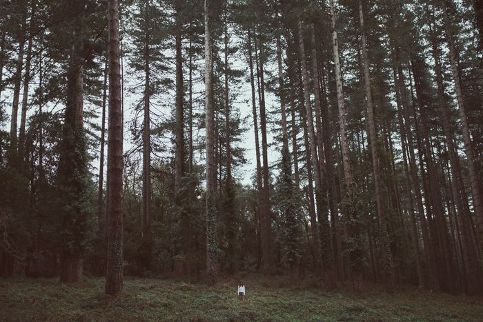 VIEW OF TREES ON FOREST