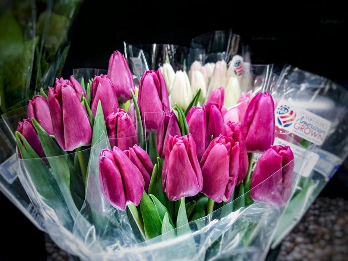 Pink Tulips, grown in the USA for sale! Flower Freshness Petal Pink Color Beauty In Nature Nature Fragility Plant Growth Flower Head Close-up Leaf No People Tulips Easter Grown In The USAFlowers Grown In The USA Pink Tulips Spring Flowers EyeEmNewHere Spring Easter Flowers Mother's Day