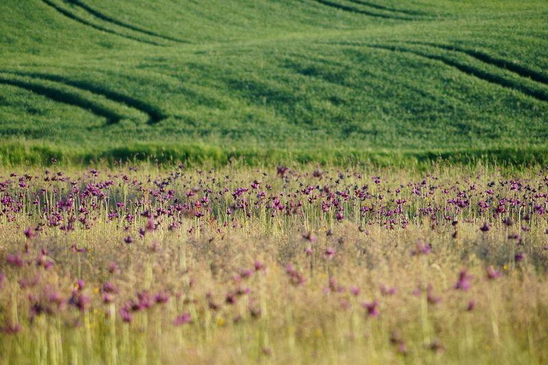 Pomiędzy łąkami