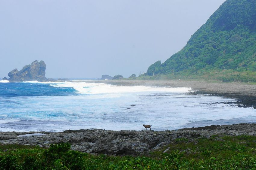 Island Goat in stormy weather on Lanyu, the Orchid Island, Taiwan Orchid Island Stormy Weather Stormy Nature Waves Nature Photography Storm Taiwan Gettylicious The KIOMI Collection Orchid Island Stockphoto Travel Lanyu EyeEm Taiwan Travel Destinations Goat Wildlife Wildlife & Nature Newstrekker Taiwanese Rocky Beach Rugged Nature_collection